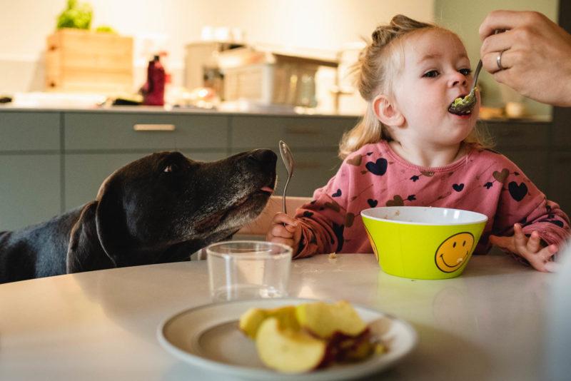 Kleinkind wird vom Vater mit Löffel am Tisch gefüttert während dem Hund den Löffel des Kindes abschleckt